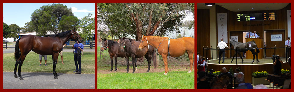 banner available horse